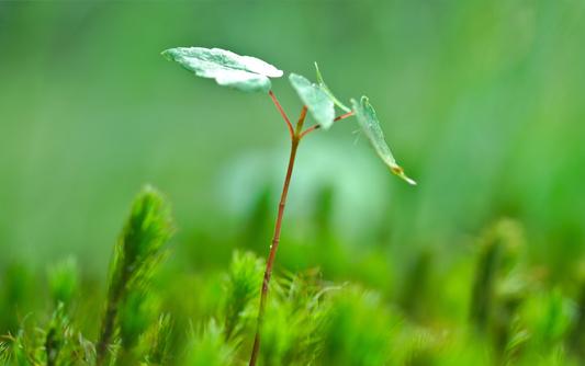 节能环保网站建设方案