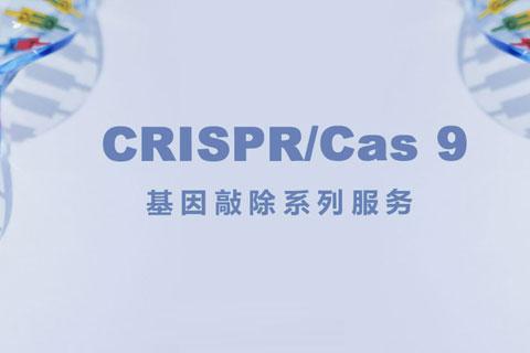 上海生博生物医药科技有限公司